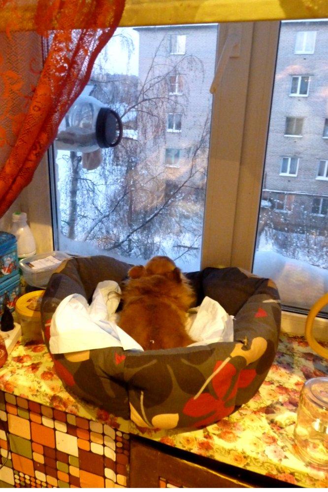 Странности наших питомцев или Как понять собаку