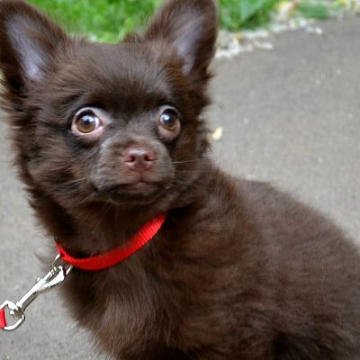 https://www.chihuadog.ru/data/xengallery/66/66674-a700b0d3933600bef9a623b7a78363d0.jpg